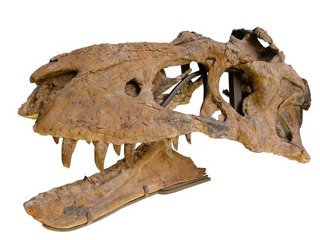 Newtyrannosaur